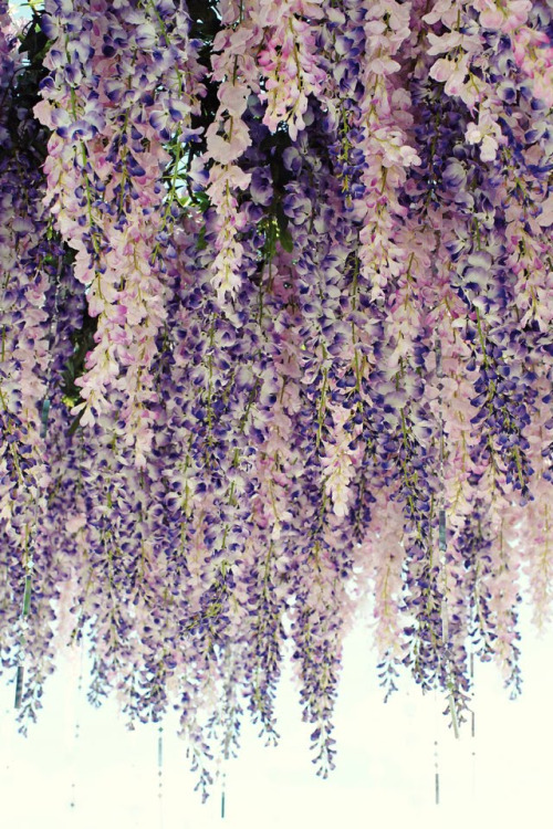 ceeecefdcfd-hanging-flowers-wisteria-wallpaper-wp4401656