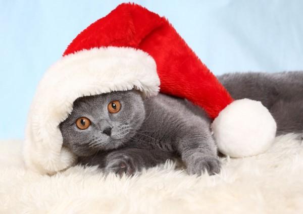 chatons-chats-cat-gato-Katze-katter-kettir-cait-wallpaper-wp5201682