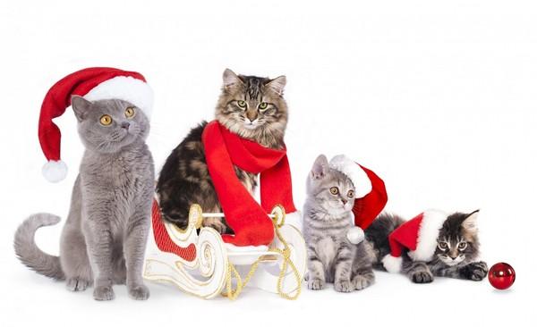 chatons-chats-cat-gato-Katze-katter-kettir-cait-wallpaper-wp5201794