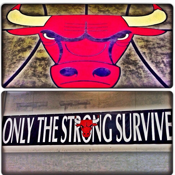 chicago-bulls-only-the-strong-survive-wallpaper-wp5603818
