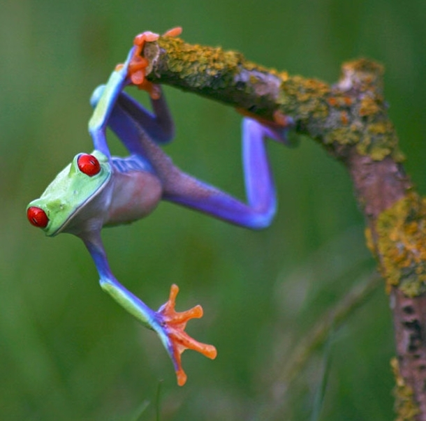 colorful-tree-frog-wallpaper-wp5006203