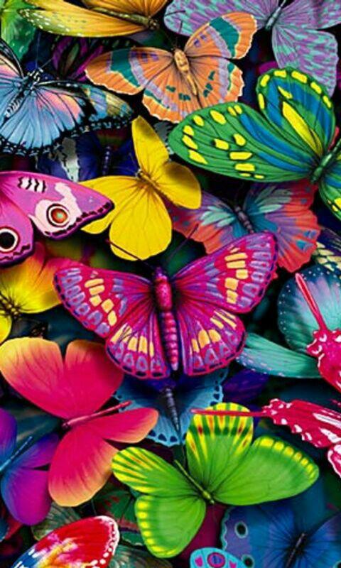 colour-butterflies-wallpaper-wp5203214