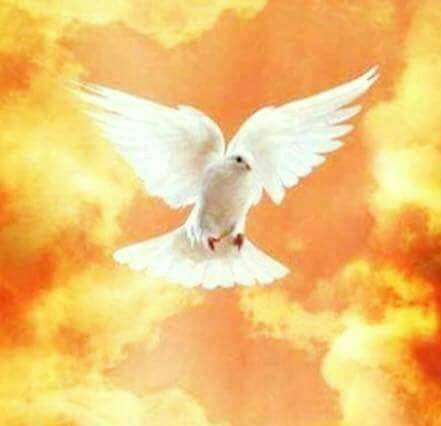 daeadcfaca-white-doves-angels-wallpaper-wp58024
