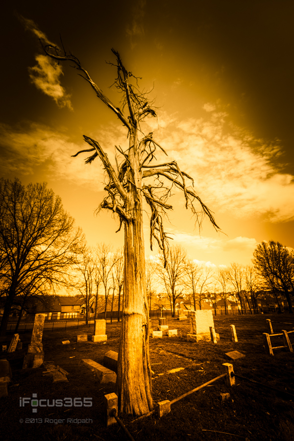dead-old-tree-in-cemetery-wallpaper-wp5404455