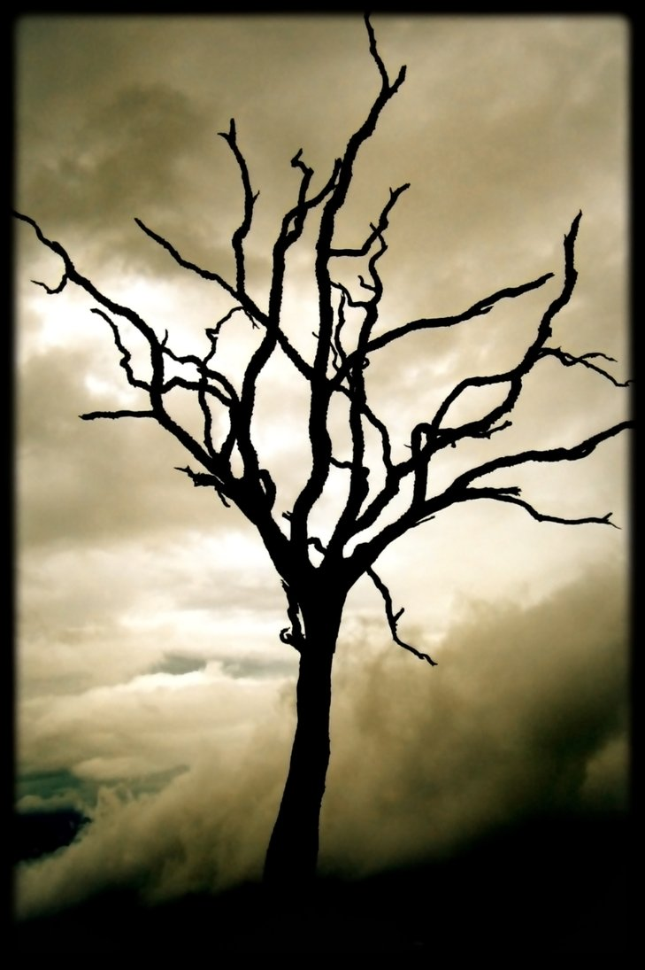dead-trees-via-http-fb-com-pinwoot-wallpaper-wp5404464