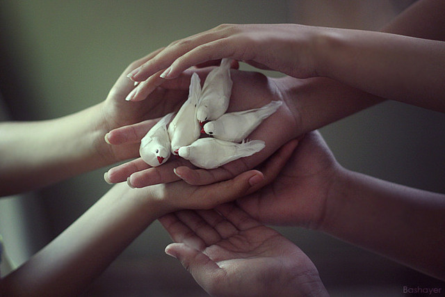doves-in-hand-wallpaper-wp6003022