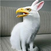 eagle-bunny-wallpaper-wp4406638