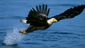 efdaebafebebdbfb-eagle-photo-wallpaper-wp3405183