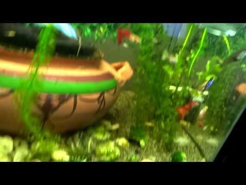 fish-tank-hd-fish-tank-hd-Fish-FishTank-TropicalFish-Fishing-NomCat-Sa-wallpaper-wp360216