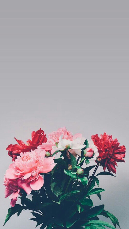 flowers-and-background-image-wallpaper-wp4605936