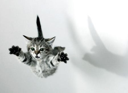 flying-cat-wallpaper-wp580250
