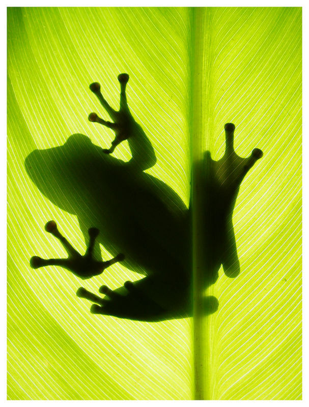 for-the-love-frogs-picture-and-wallpaper-wp4407110