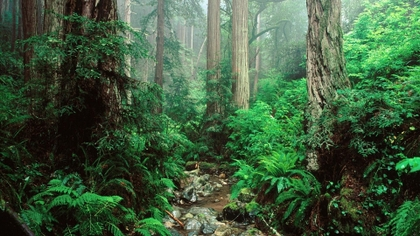 green-landscapes-trees-jungle-rainforest-1920x1080-www-miscellaneoushi-com-%C3%97-wallpaper-wp3606385