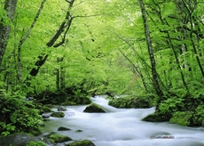 green-water-nature-forest-photography-summer-x-wallpaper-wp5605300