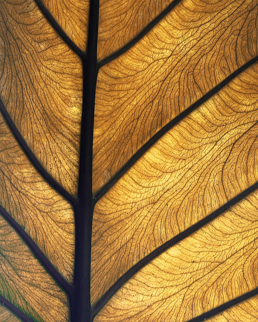 leaf-wallpaper-wp4808345