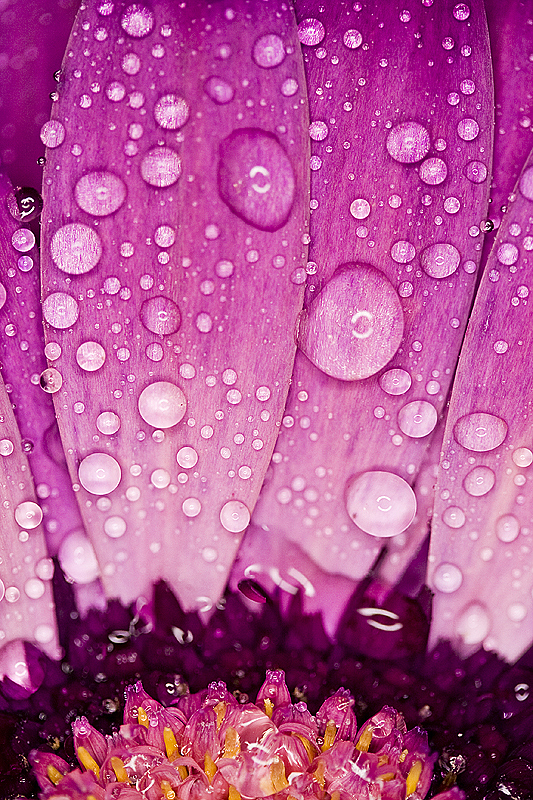 love-the-droplets-wallpaper-wp4808535