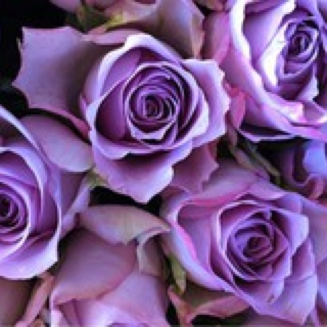 love-the-lavender-roses-wallpaper-wp6004703