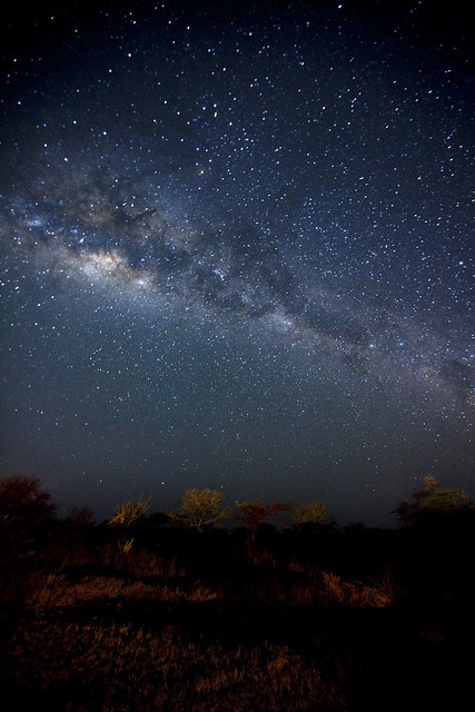 stars-over-Serengeti-park-Tanzania-wallpaper-wp429340