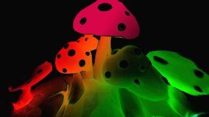 Fond d'écran de champignons