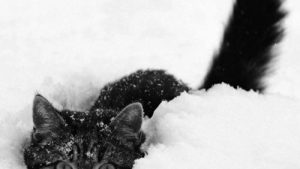Cute, funny, beautiful animals in the snow wallpaper