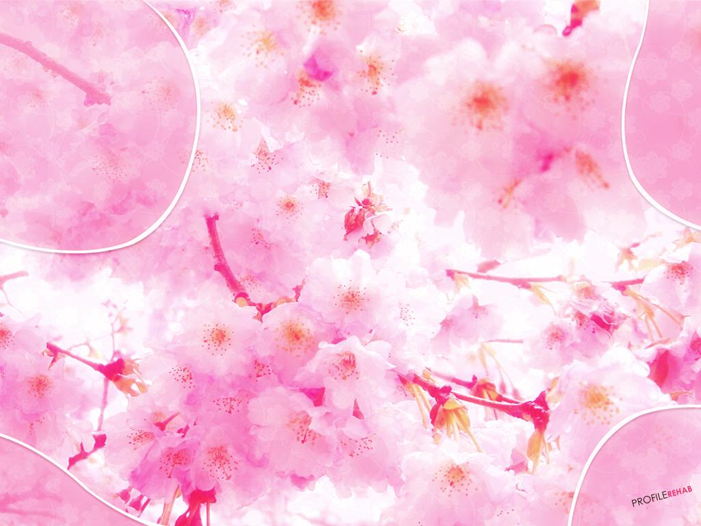 x-Free-Pink-Flower-Pretty-Flowers-Download-Profilerehab-wallpaper-wp5802866