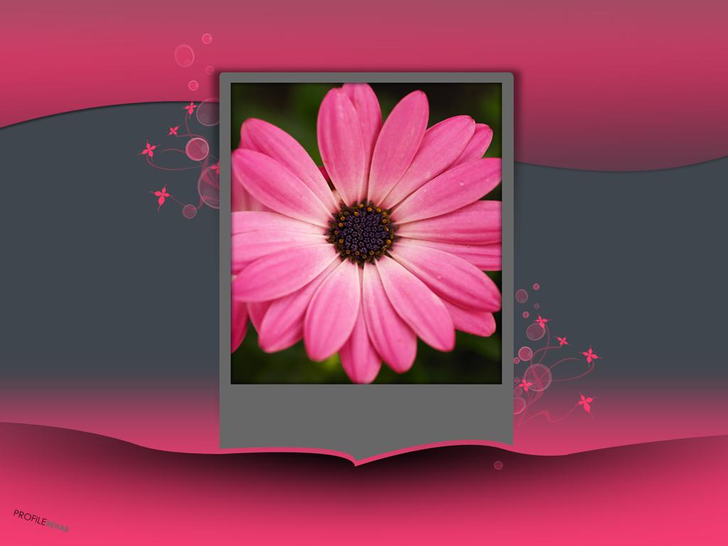 x-Gray-Pink-Flower-Pink-Grey-Background-Download-Profilerehab-wallpaper-wp5802867-1