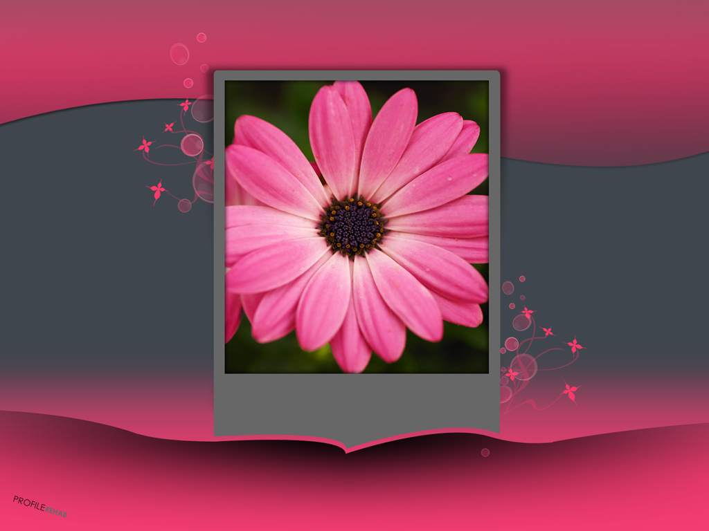 x-Gray-Pink-Flower-Pink-Grey-Background-Download-Profilerehab-wallpaper-wp5802867