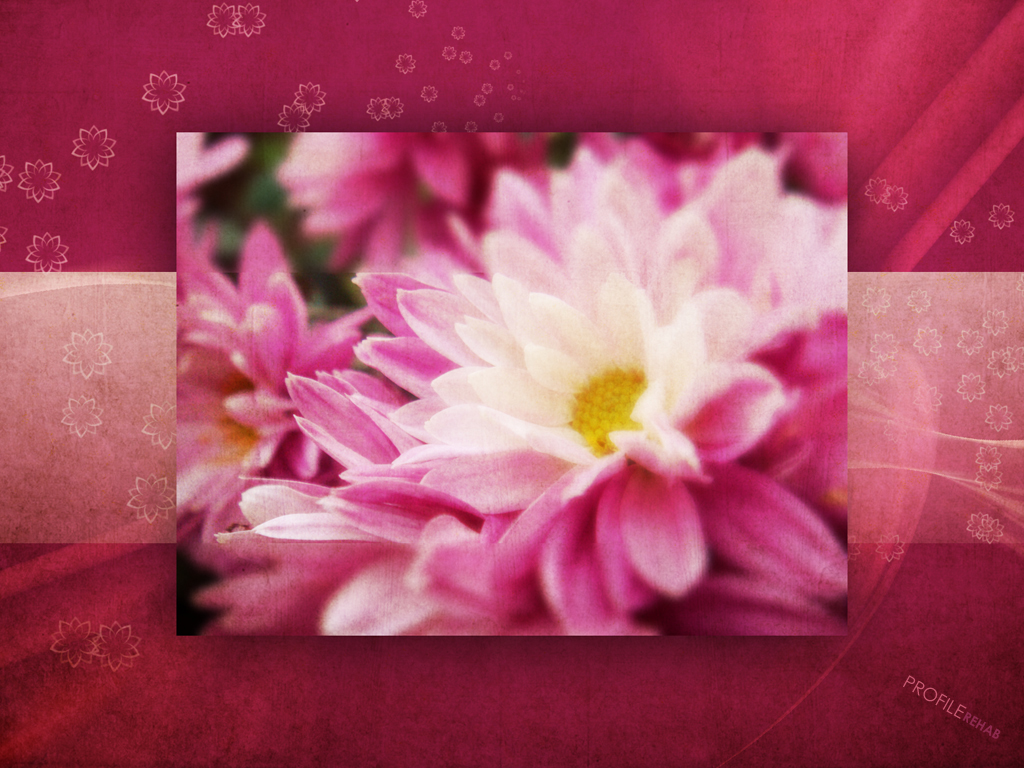 x-Maroon-Flowers-Purple-Flower-Background-Image-Download-Profiler-wallpaper-wp5802874
