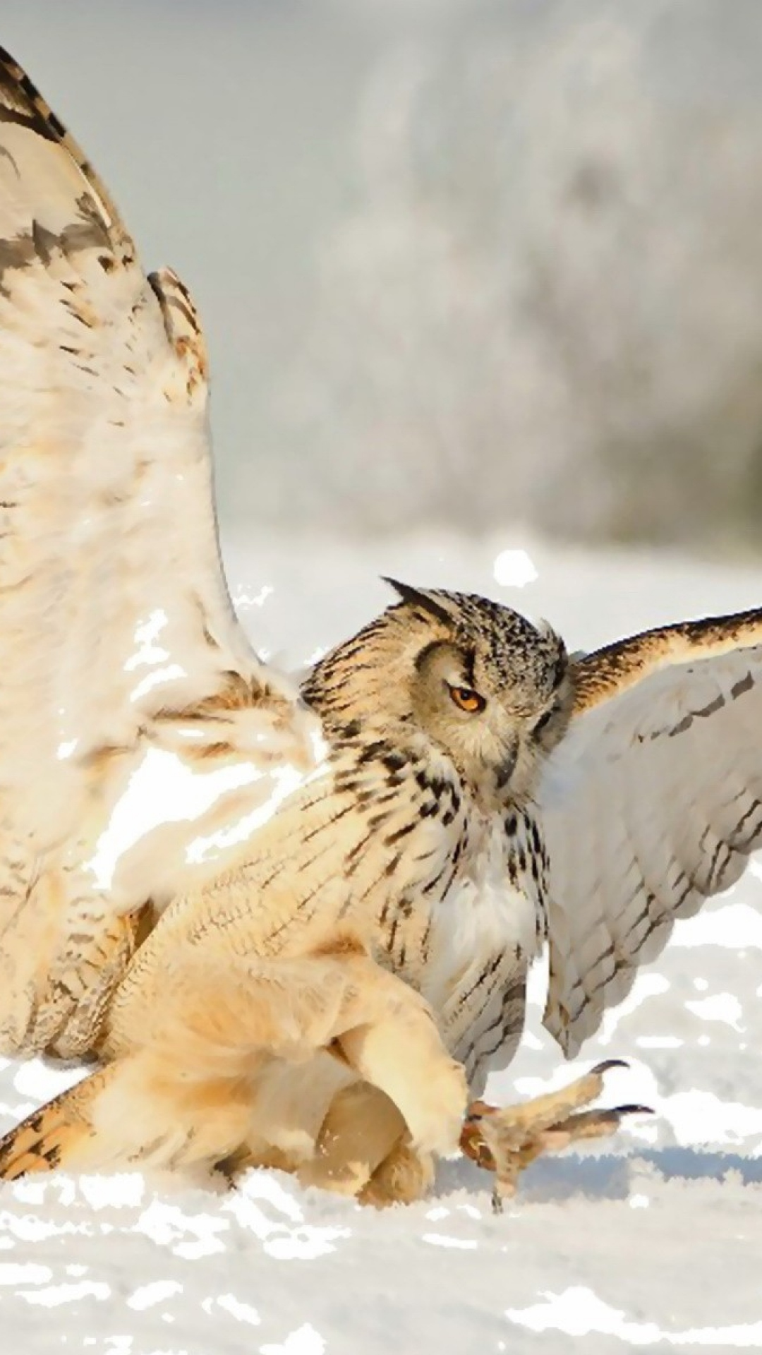 1080x1920-owl-snow-swing-predator-wallpaper-wp380600