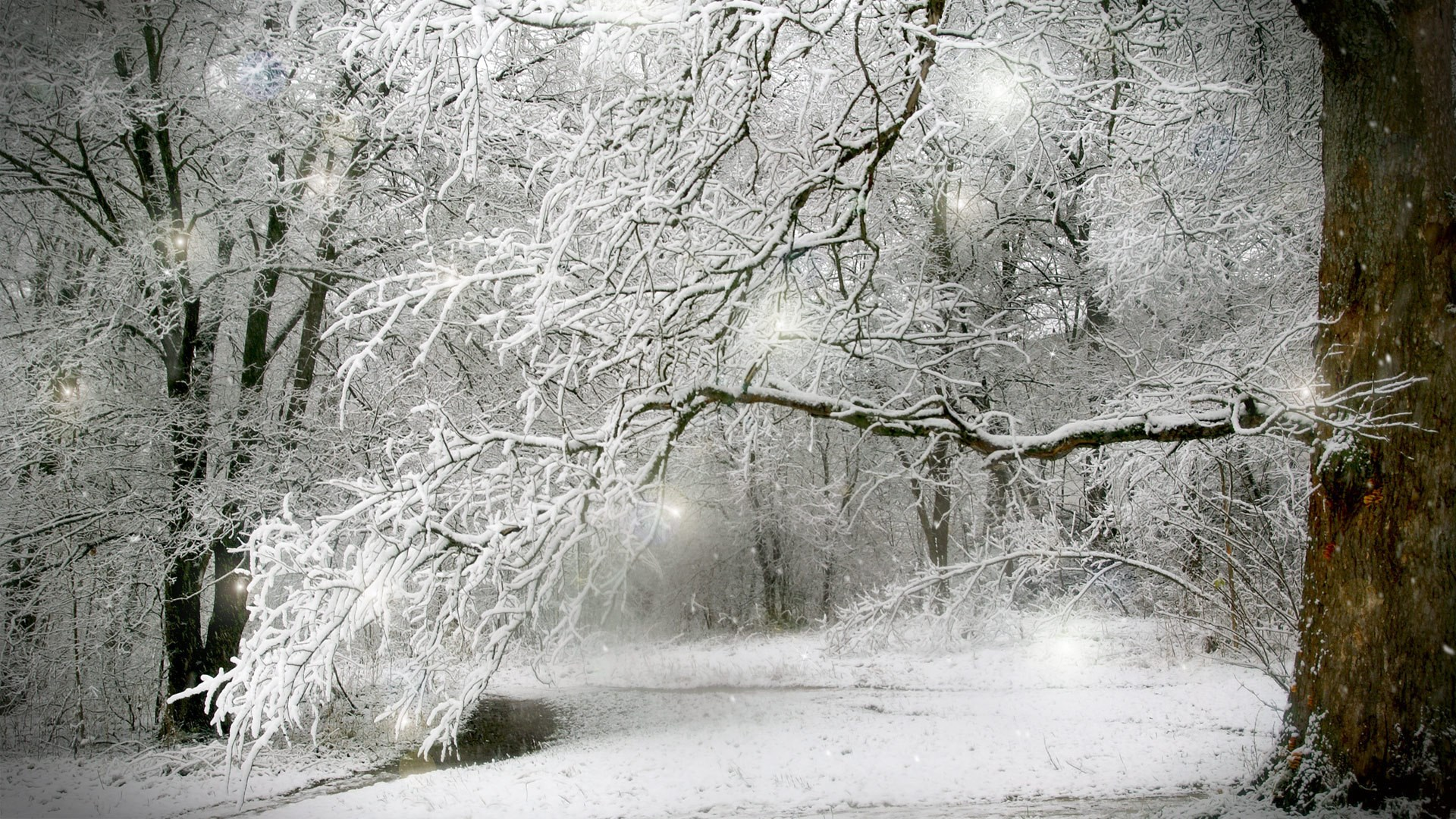 1920-x-1080-px-winter-snow-scenes-Full-HD-Pictures-by-Lawton-Kingsman-wallpaper-wp360740
