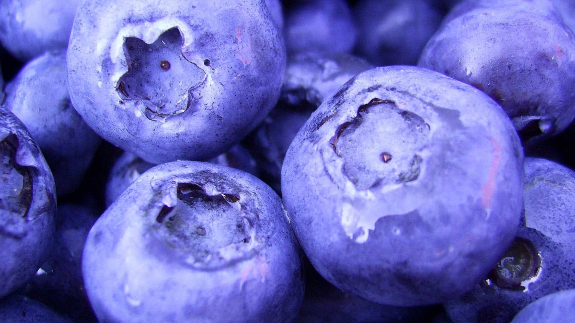 1920x1080-free-screensaver-for-blueberry-wallpaper-wpc580762