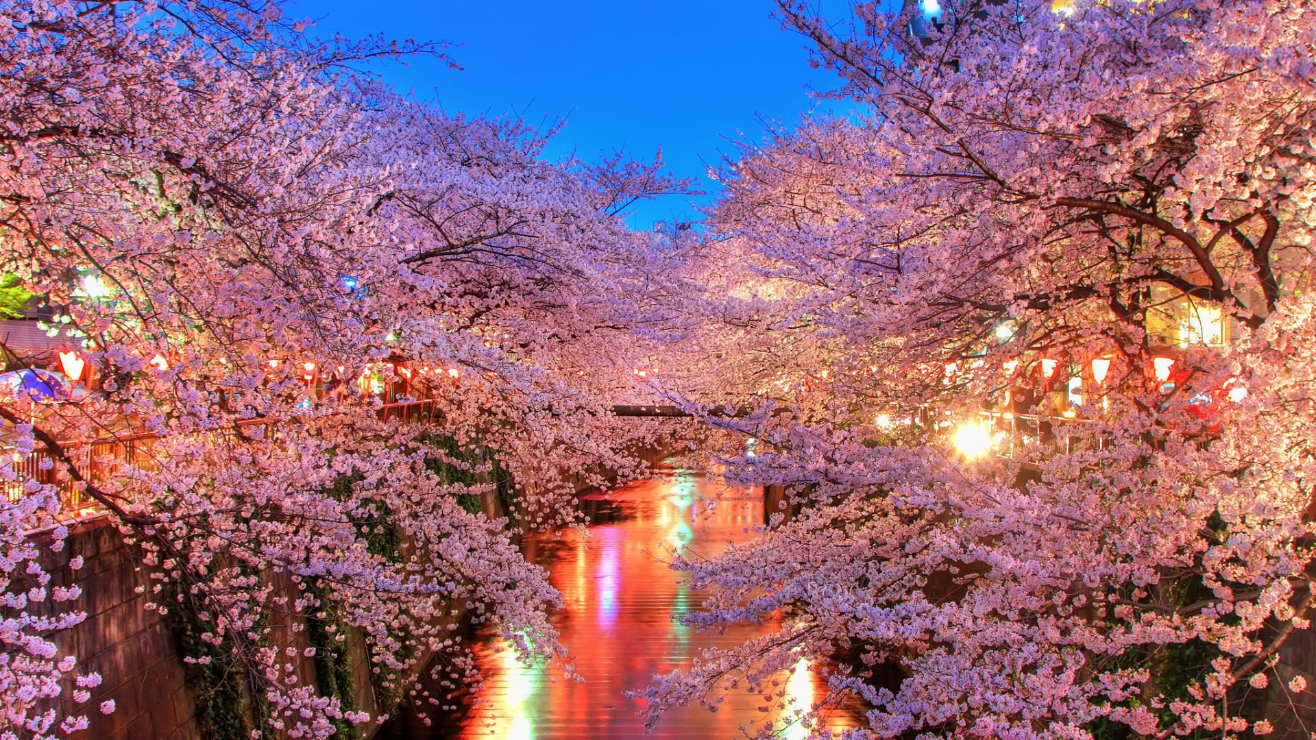 1920x1080-o-hanami-blossom-sakura-japan-wallpaper-wp360907