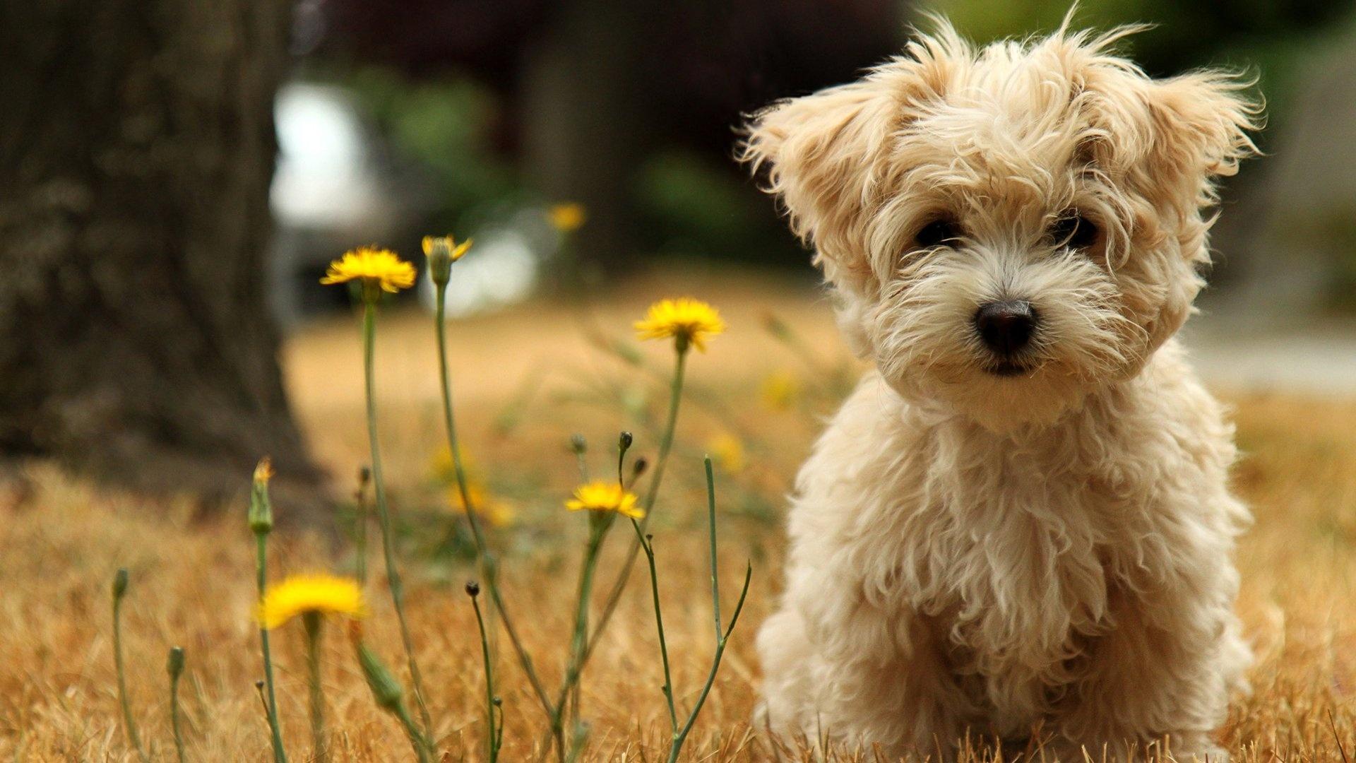 1920x1080-puppy-grass-flowers-face-wallpaper-wpc5801028