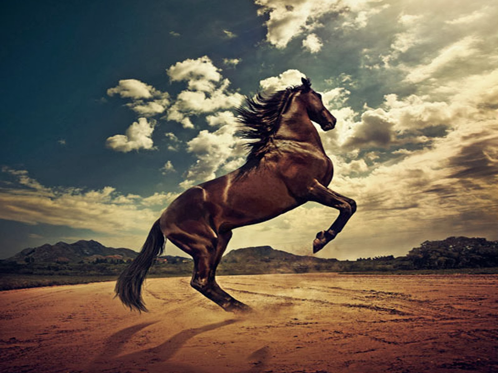 A-beautiful-dark-brown-horse-rising-on-his-back-legs-Description-from-magazinehive-com-I-searche-wallpaper-wp3802061