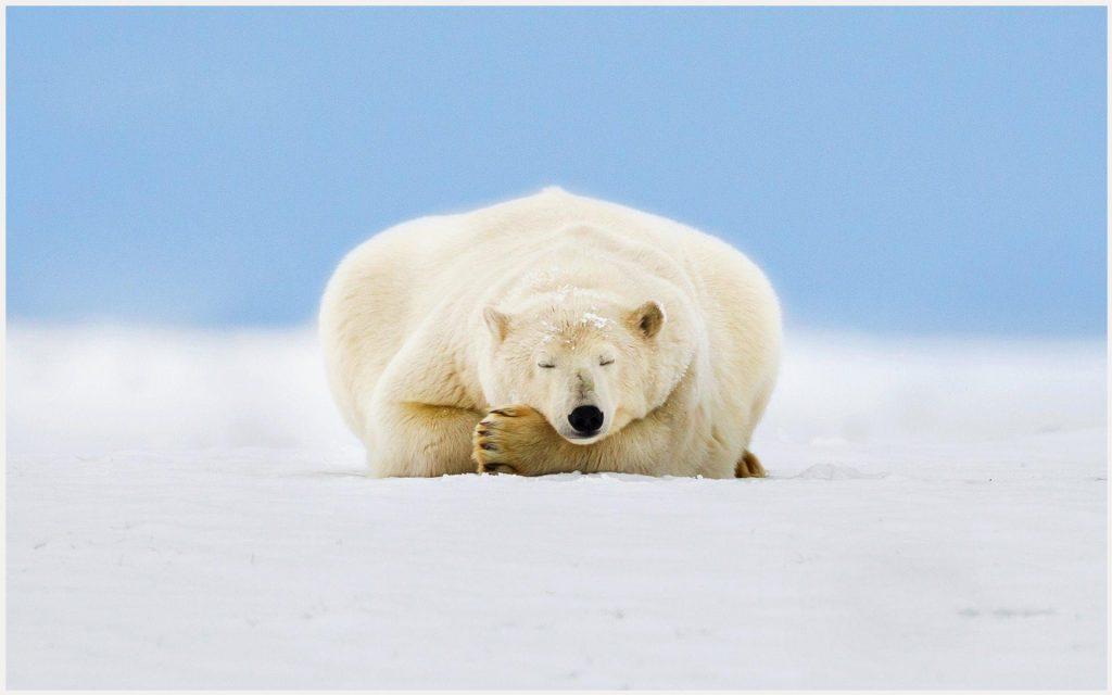 Alaskan-Sleeping-Bear-alaskan-sleeping-bear-1080p-alaskan-sleeping-bear-wallp-wallpaper-wp3602336