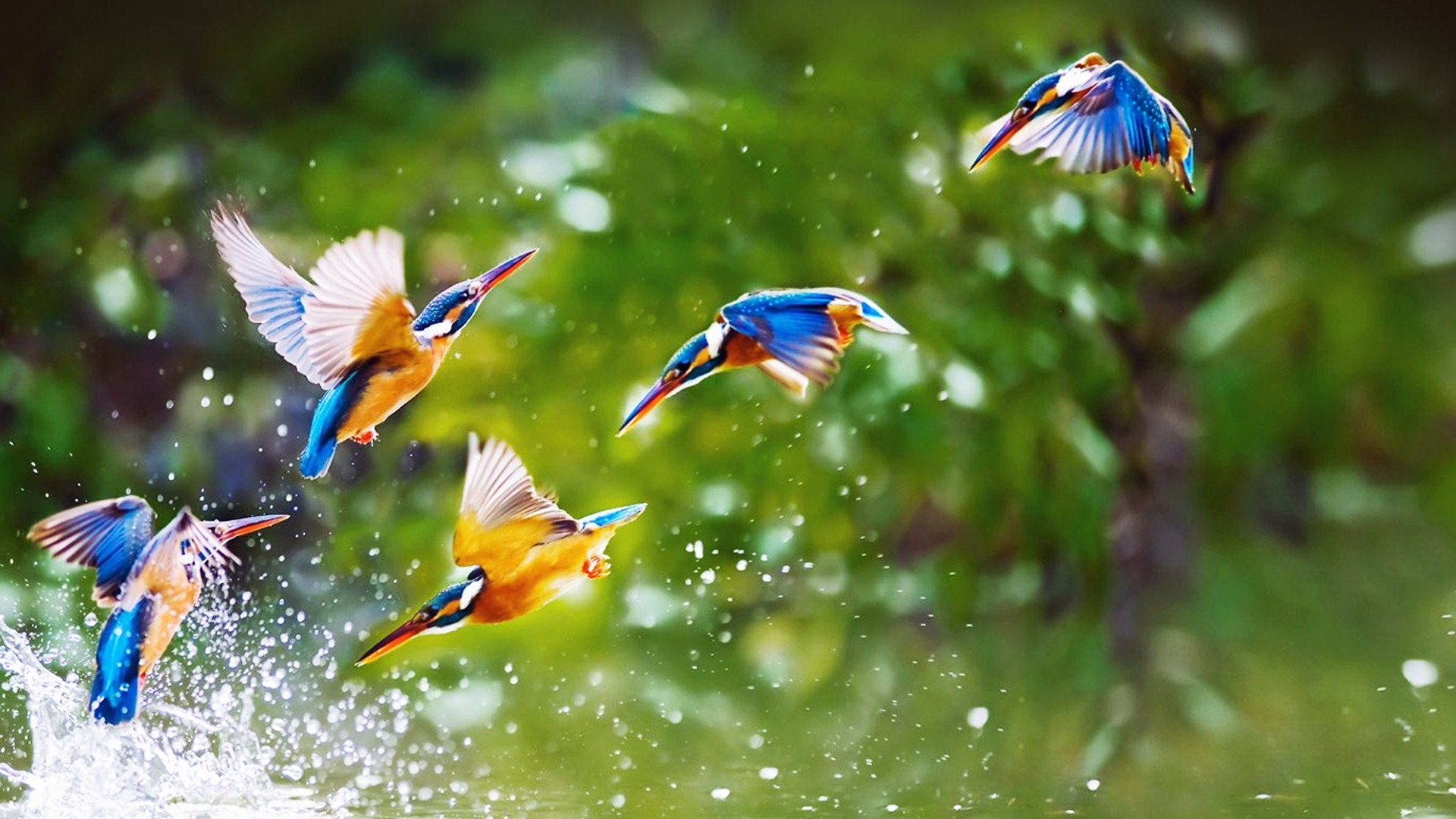 Amazing-birds-pictures-download-from-https-hqtpictures-wordpress-com-wallpaper-wpc5807