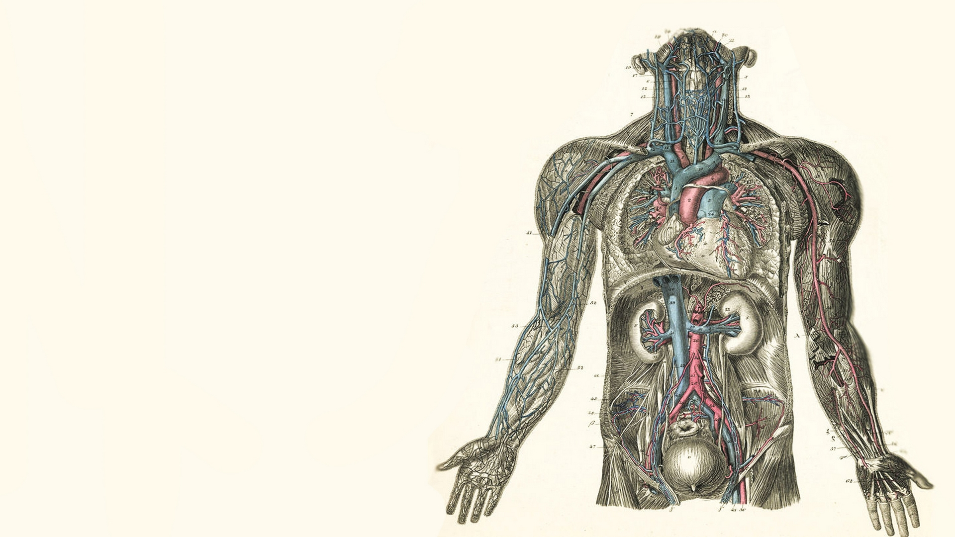 Anatomy-Computer-Desktop-Backgrounds-1920x1080-ID-wallpaper-wpc9202385