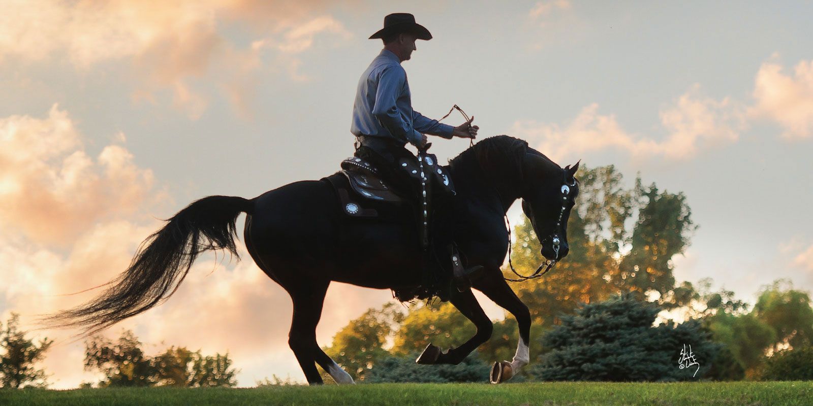 Arabian-from-Arabian-Horse-World-articles-and-news-wallpaper-wpc5802232