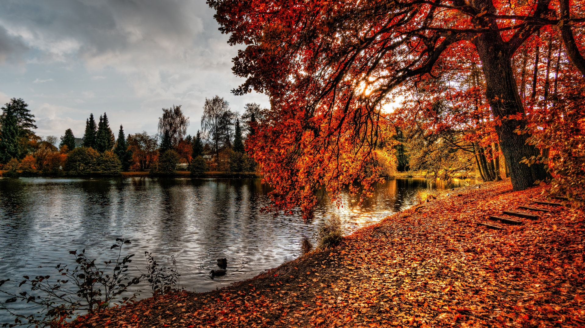 Autumn-1920x1080-wallpaper-wp3602831
