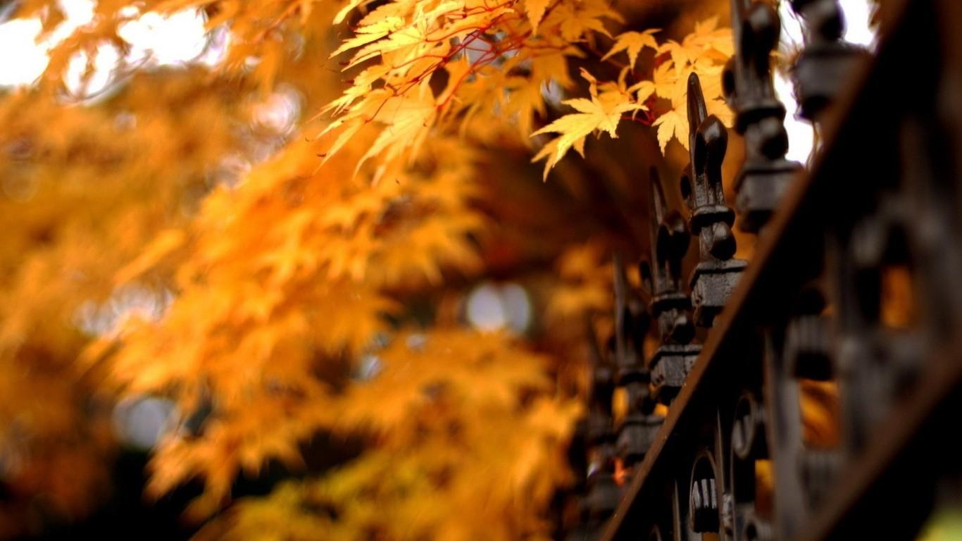Autumn-beautiful-computer-desktop-wallpaper-wpc5802378