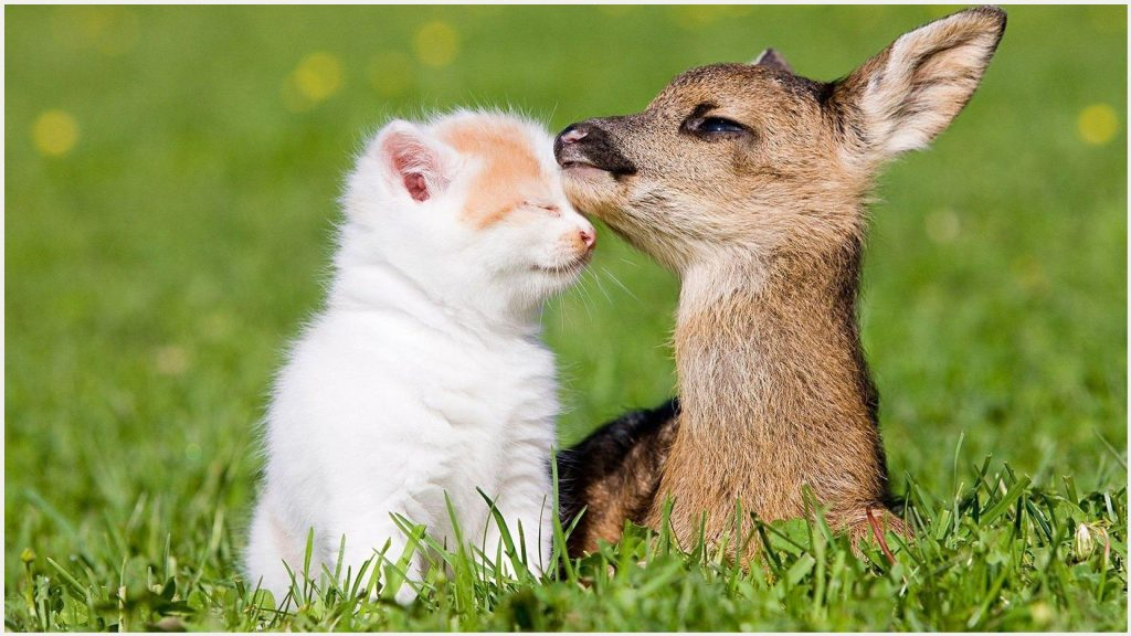 Baby-Deer-And-Baby-Kitten-baby-deer-and-baby-kitten-1080p-baby-deer-and-baby-wallpaper-wpc9002510