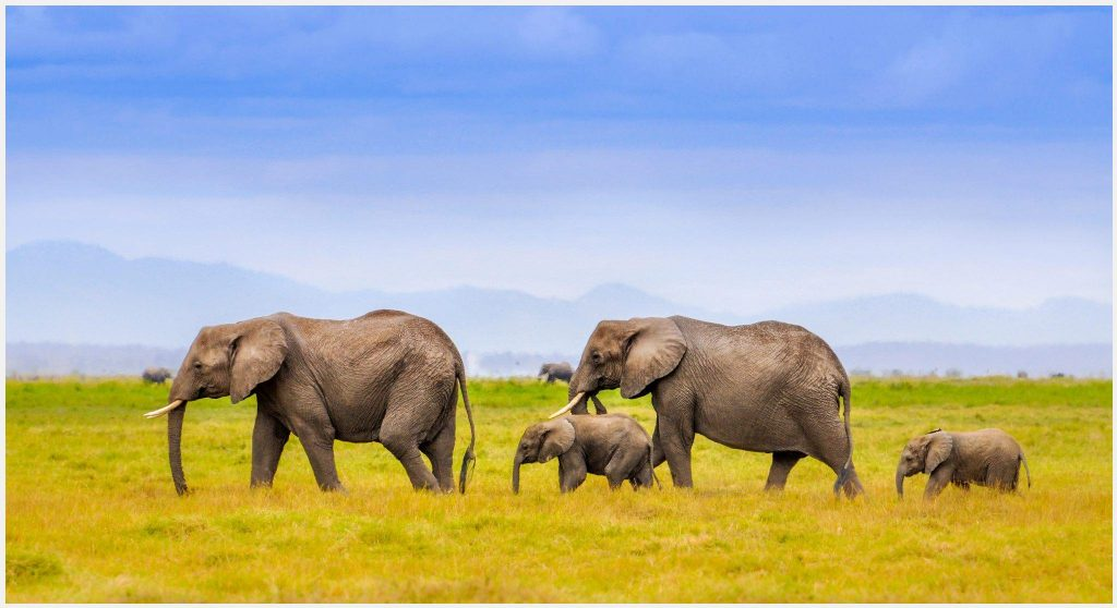 Baby-Elephants-Family-baby-elephants-family-1080p-baby-elephants-family-wallp-wallpaper-wpc9002515