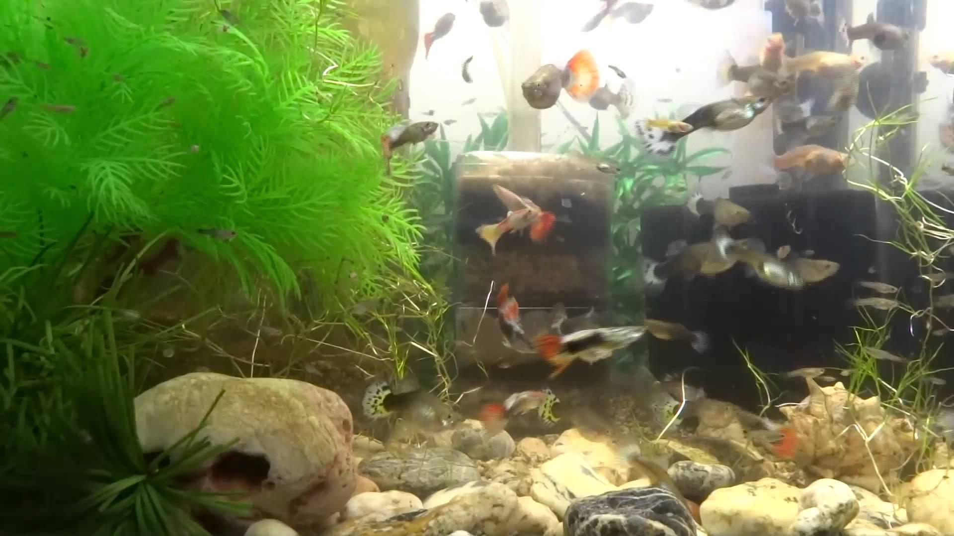 Beautiful-Fish-Aquarium-fishtank-fish-tank-howto-make-design-aquarium-FHD-1080P-NEW-wallpaper-wp3603108