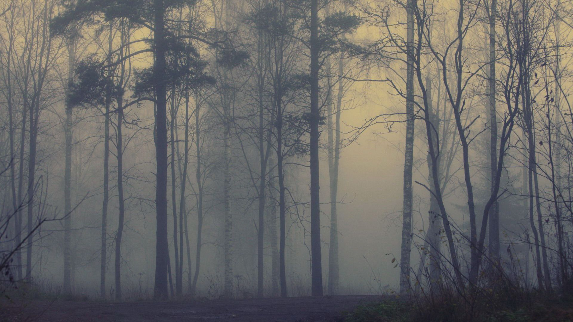 Beautiful-Forest-Foggy-Free-Backgrou-wallpaper-wpc5802653