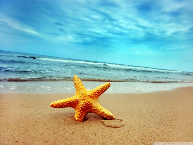 Beautiful-starfish-sea-beach-sand-Follow-us-www-pinterest-com-webneel-wallpaper-wp3801303