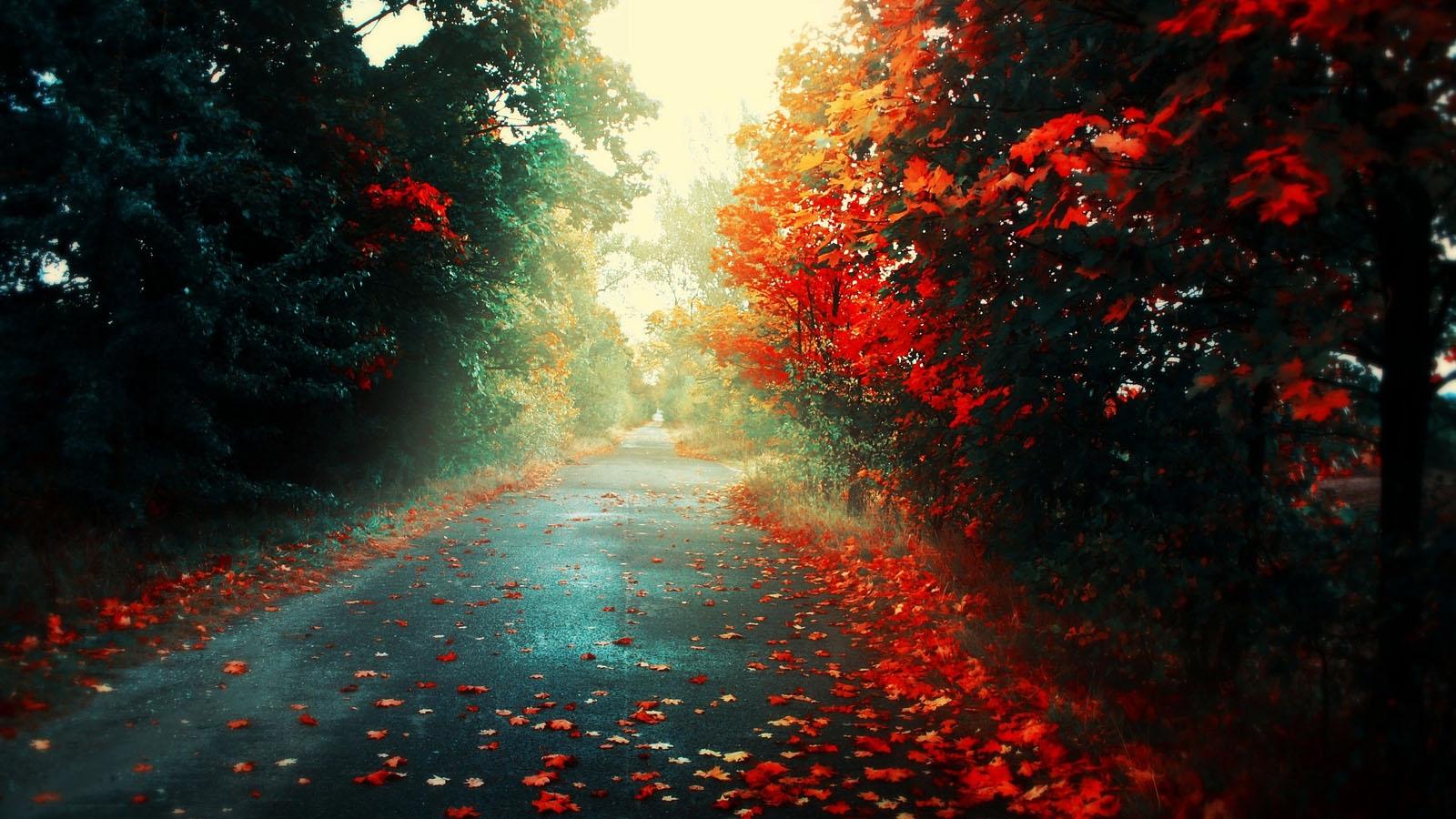 BeautifulFlowersinrainLatest-1920%C3%97-Rainy-Images-Adorable-wallpaper-wpc5802701