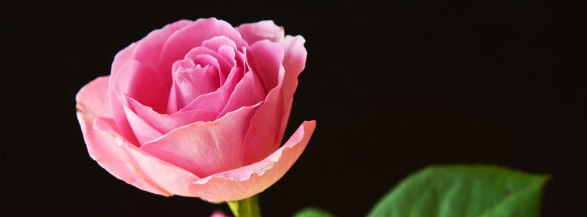 Best-pink-roses-facebook-cover-wallpaper-wp3603299