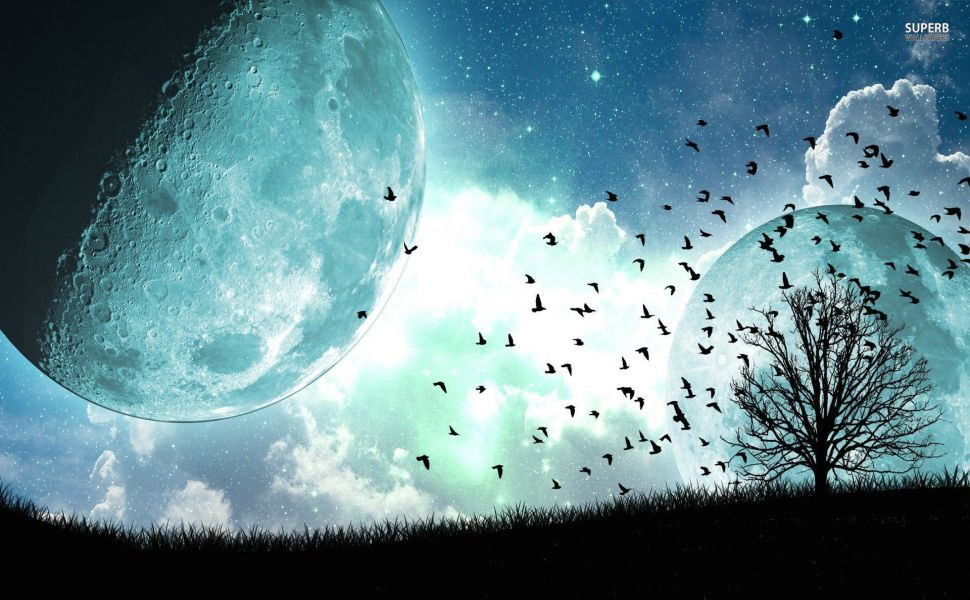 Birds-and-tree-under-the-blue-moon-HD-wallpaper-wp3803186