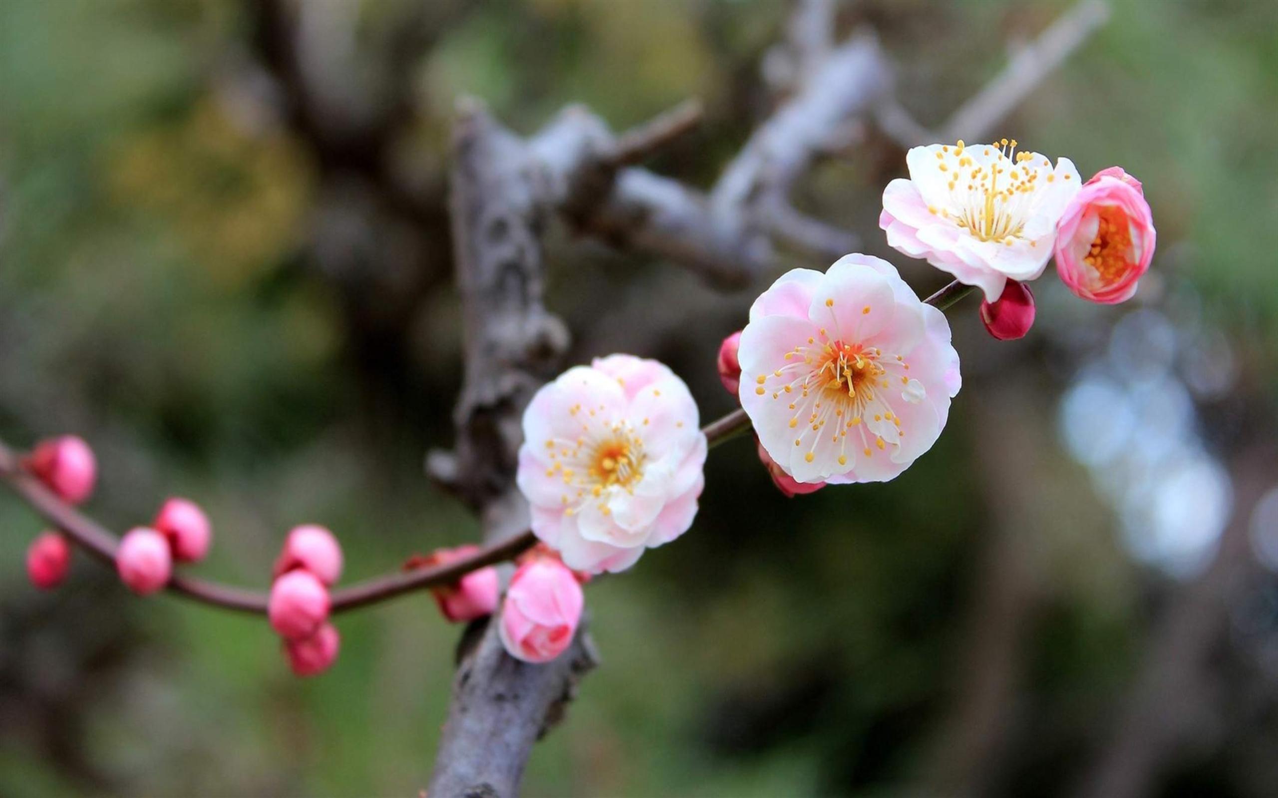 Blooming-Apple-Tree-wallpaper-wpc9003005