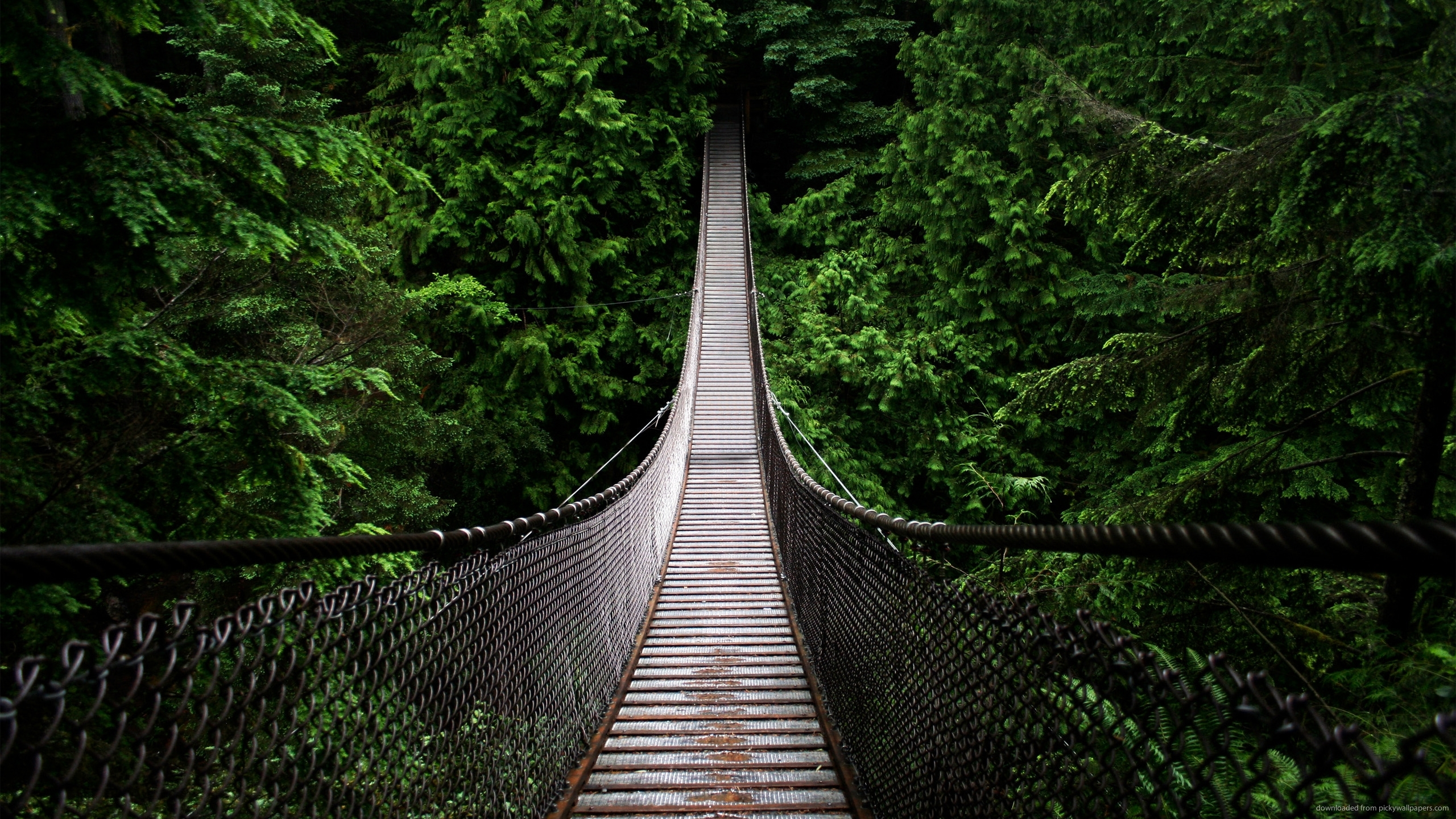 Bridge-into-the-woods-for-x-wallpaper-wpc5803050
